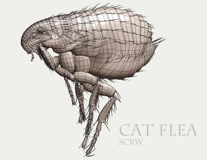 3d cat flea