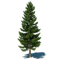 3dsmax pine tree