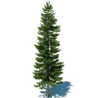 Pine Tree D