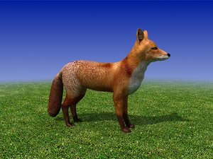 red fox 3d max