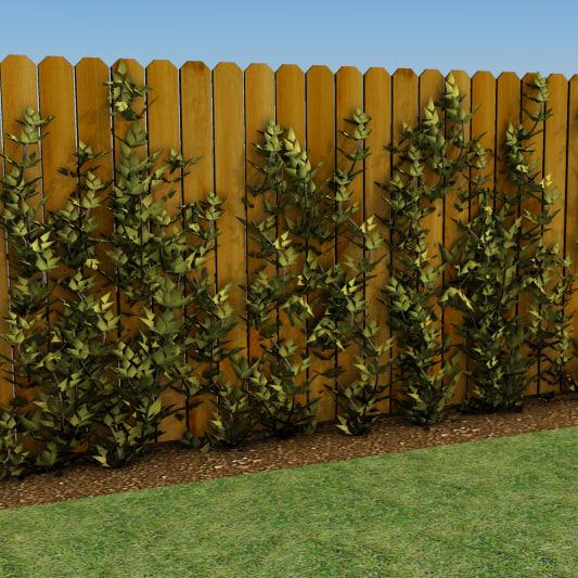 growing vines 3d model