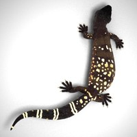 obj gila beaded lizard