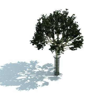 maya city sidewalk tree