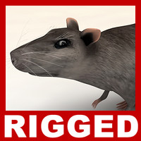 Rat (Rigged)