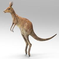 3d max kangaroo