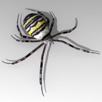spider arachnid 3ds