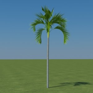 palm carpentaria acuminata 3d 3ds