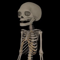 fetus skeleton