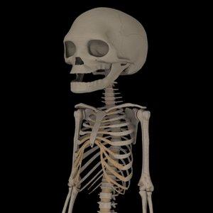 maya fetus skeleton
