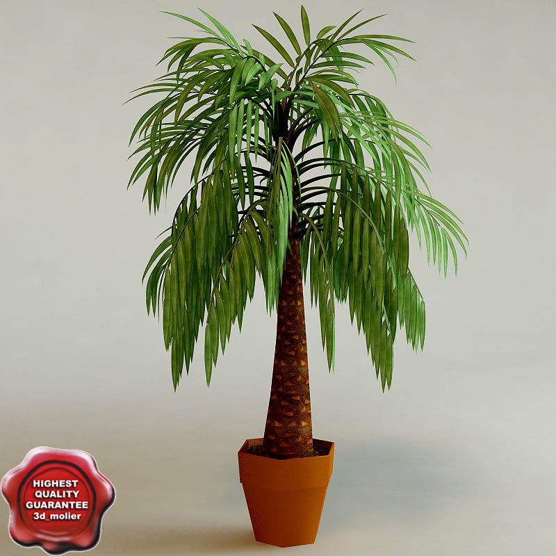 3ds max palm interior