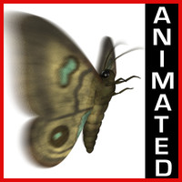 Moth Animated