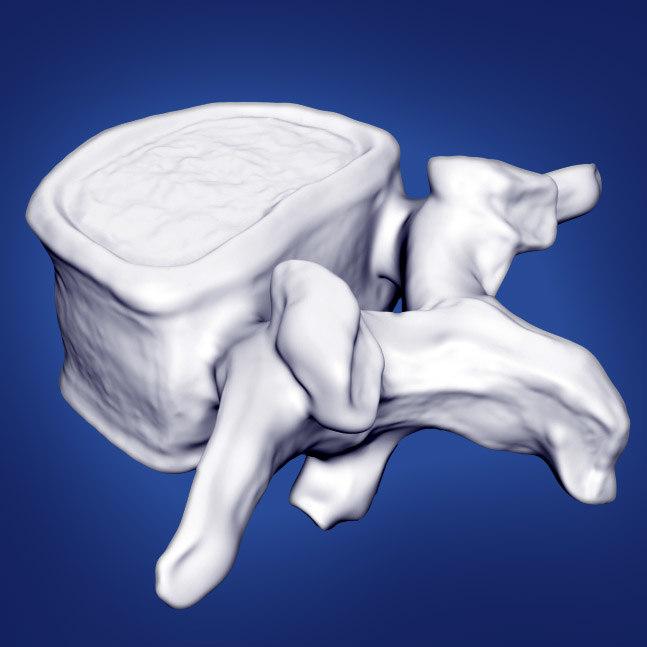 3d vertebrae model