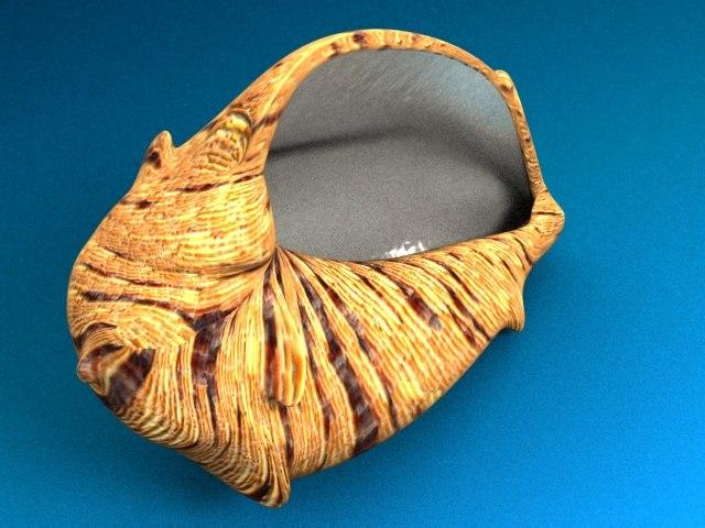 3ds max sea shell