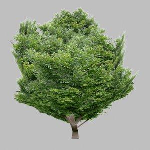 bush 3d obj