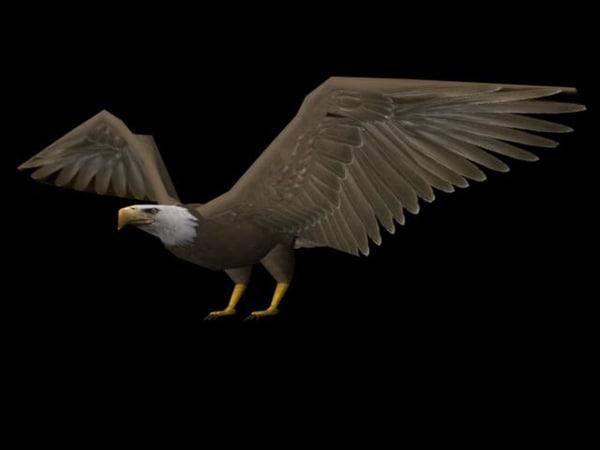 bald eagle bird animate ma
