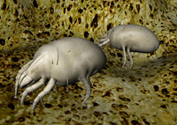 3d house dust mite