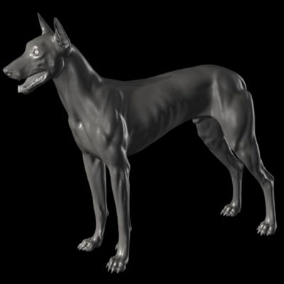 3d dog canine anatomy model