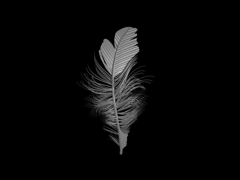 3d birds feather