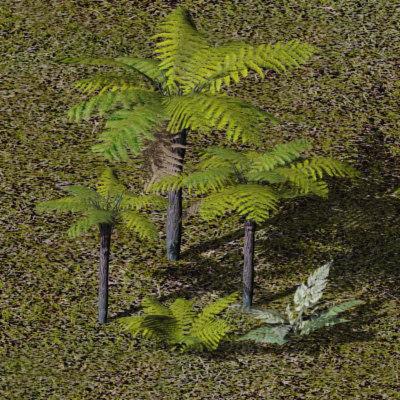 treeferns ferns plants 3d max