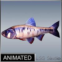 3d river fish
