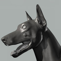 3d dog canine anatomy model