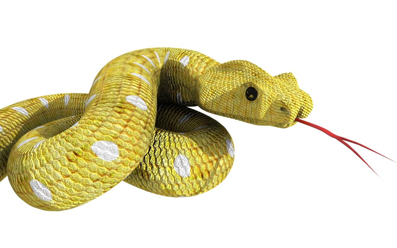 snake free