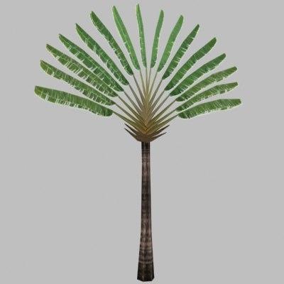 traveler tree palm 3d model