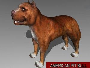 pit bull dog 3d model