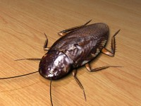 3d cockroach insect