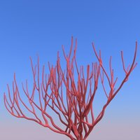 Corals B