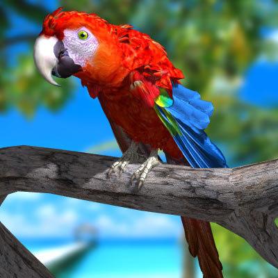 parrot macaw 3d model