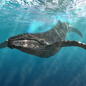 lightwave humpback whale