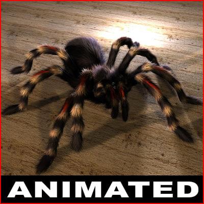 3d tarantula vogelspinne animation