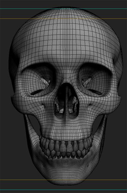 anatomy human skull obj