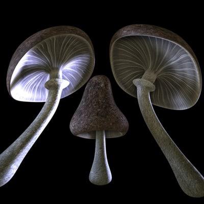 3d pilze mushrooms
