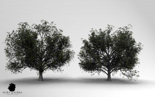 3ds max english oak trees 2