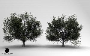 3ds max english oak trees 2