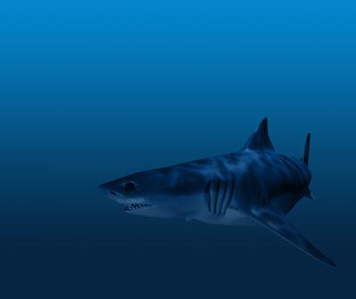 3d great shark