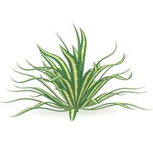 c4d plant agave americana