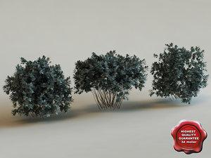 3ds conocarpus erectus modelled