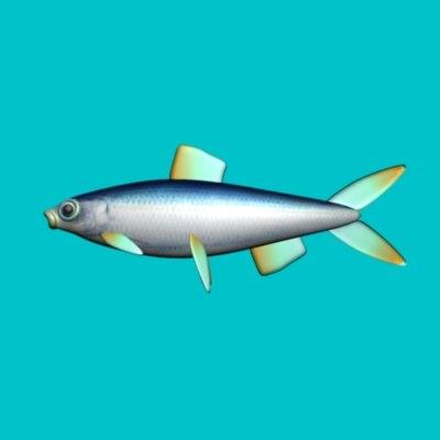 3d rigged sardine model