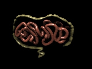 intestines small 3d 3ds
