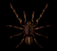 cool spider 3d model