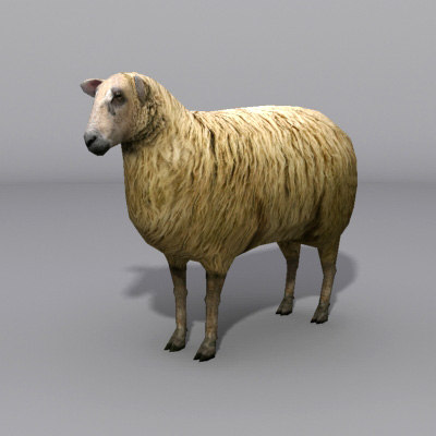 sheep 3d max