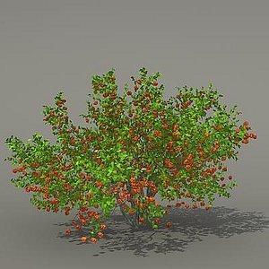 maya busch shrub
