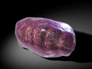 mitochondria 3ds