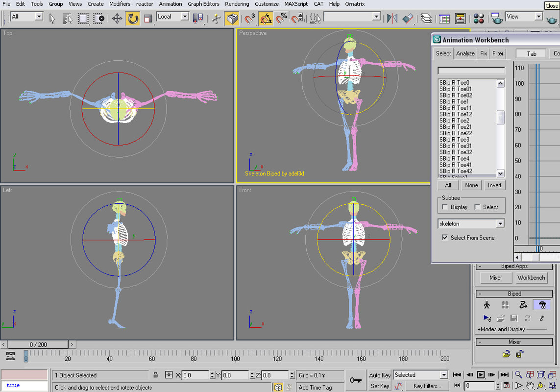 realistic skeleton biped human 3d model