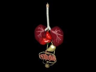 3d model internal organ