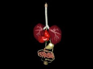 3d model internal organ