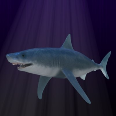 max white shark
